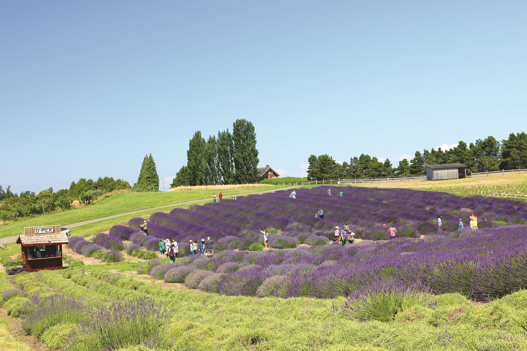 Graysmarsh Lavender and Berry Farm